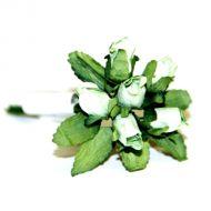 Светло-зеленые бутоны роз