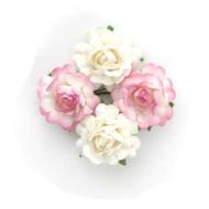 Цветы чайной розы бело-розовые