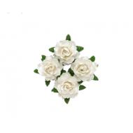 Цветы кудрявой розы бело-розовые