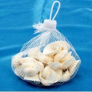 Набор морских раковин 3