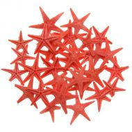 Набор натуральных морских звезд