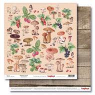 Бумага грибы и ягоды, коллекция в лесу
