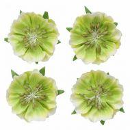 Цветы анемоны светло-зеленые