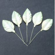 Листья бело-зеленые, 45 мм