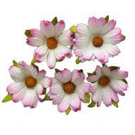 Хризантемы белые с розовым