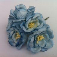 Цветы магнолии голубые
