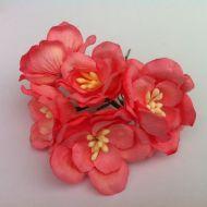 Цветы магнолии коралловые