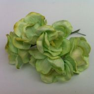 Цветы магнолии салатовые