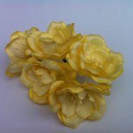 Цветы магнолии жёлтые