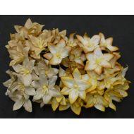 Лилии бело-желтые цвета