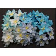 Лилии бело-голубого цвета