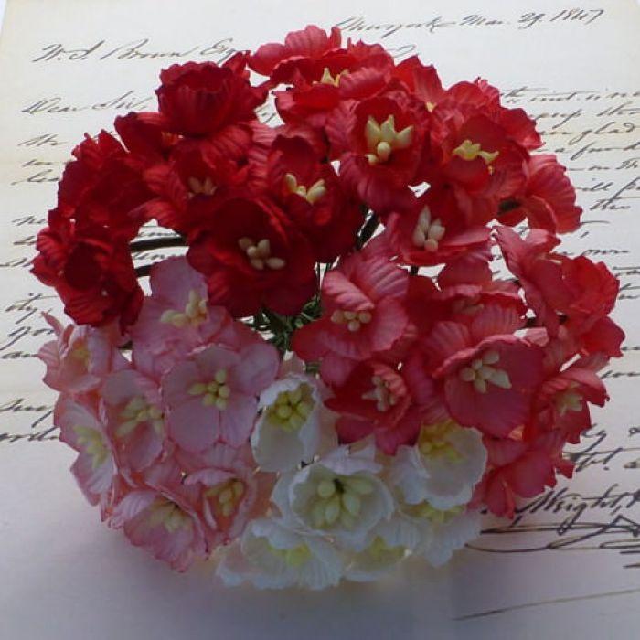 Цветы вишни бело-красного цвета для скрапбукинга