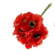 Цветы Бегония красная