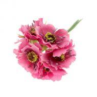 Цветы Бегония розовая