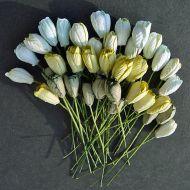 Тюльпаны бело-зеленые
