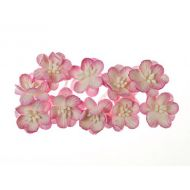 Цветки вишни бело-розовые