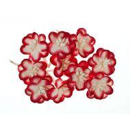 Цветки вишни бело-красные