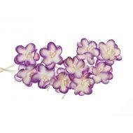 Цветки вишни бело-фиолетовые
