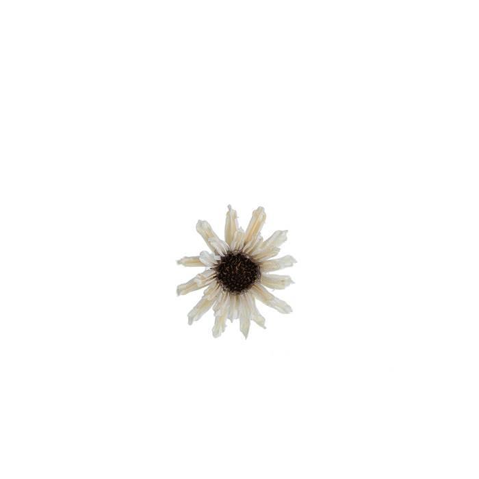 Цветок Сезам белый для скрапбукинга