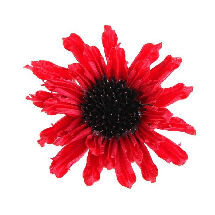 Цветок Сезам красный для скрапбукинга