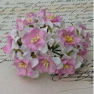 Цветы гардении бело-розового цвета