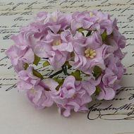 Цветы гардении сиреневого цвета