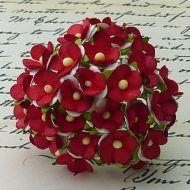 Цветы бело-красного цвета