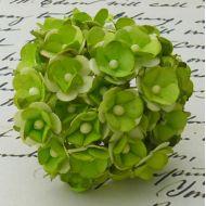 Цветы зеленого цвета