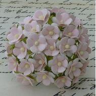 Цветы нежно-розового цвета