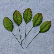 Листья зеленые, 35 мм