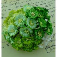 Ромашки бело-зеленые