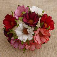 Хризантемы бело-красные