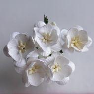 Цветы вишни белого цвета