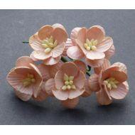 Цветы вишни персикового цвета