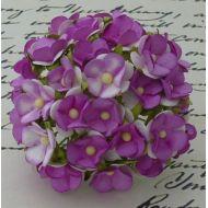 Цветы фиолетового оттенка
