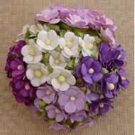 Цветы фиолетовая смесь