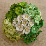 Цветы зеленая смесь