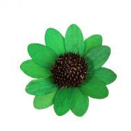 Цветок Астра зеленый