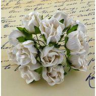 Бутоны большие дикой розы белые