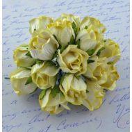 Бутоны большие дикой розы желтые