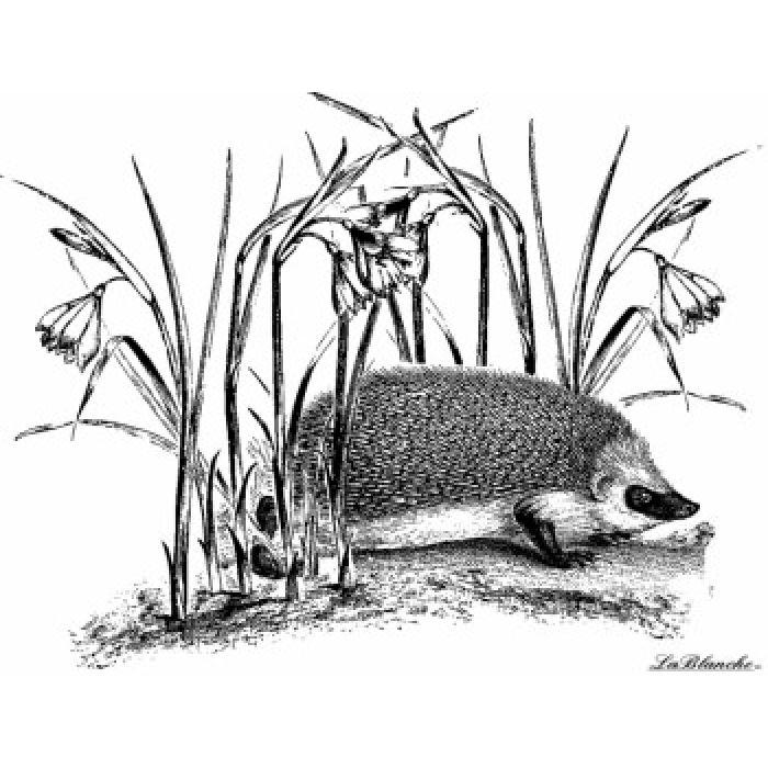 Штамп полимерный Hedgehog with flowers для скрапбукинга