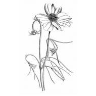 Штамп полимерный Spring Flower