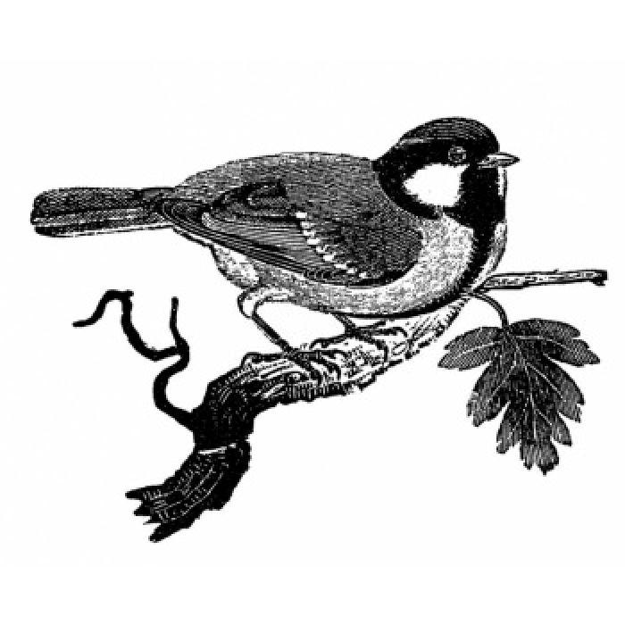 Штамп полимерный Chickadee для скрапбукинга
