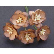 Цветы вишни шоколадно-коричневые