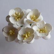 Цветы вишни слоновой кости