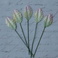 Листья бело-зелено-розовые, 25 мм