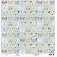 Бумага бабочки, коллекция бабочки