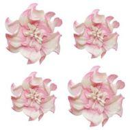 Цветы кудрявой фиалки бело-розовые