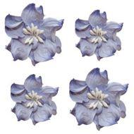 Цветы кудрявой фиалки сине-белые