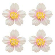 Цветы франжепани белые с розовым